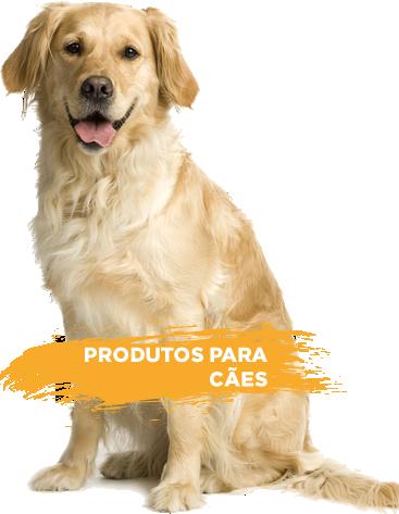 Produtos para cachorro dogchoni